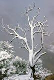 Snowy-Baum auf West-Rim Grand Canyon Lizenzfreies Stockbild
