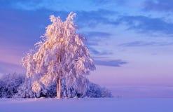 Snowy-Baum an der Dämmerung Stockfoto
