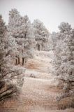 Snowy-Baum-Landschaft Stockfotografie