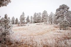 Snowy-Baum-Landschaft Lizenzfreie Stockfotos