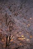 Snowy-Baum nachts Stockfoto