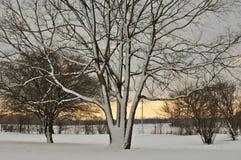 Snowy-Baum am Sonnenuntergang Stockfotografie