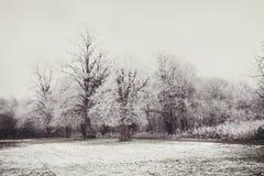 Snowy-Baum-Szene Lizenzfreie Stockfotos