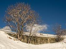 Snowy-Baum vor blauem Himmel Stockbild