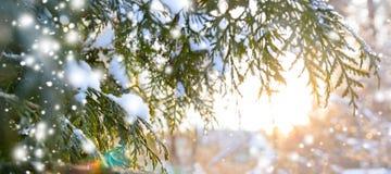 Snowy-Baumast bei Sonnenuntergang Lizenzfreies Stockbild