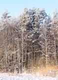 Snowy-Baumkronen Lizenzfreie Stockbilder