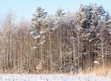 Snowy-Baumkronen Stockfotografie