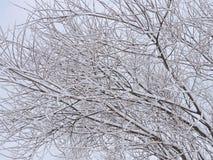 Snowy-Baummuster Lizenzfreie Stockbilder