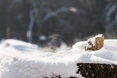 Snowy-Baumstumpf Lizenzfreies Stockfoto