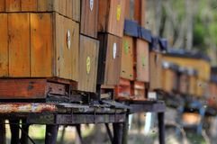 Bee hives. The snowy beehives in spring royalty free stock image