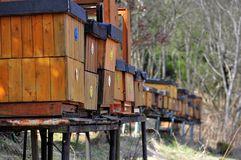 Bee hives. A long line of wood bee hives at the beginning of spring royalty free stock image