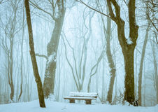 Snowy bench in the forest Stock Image