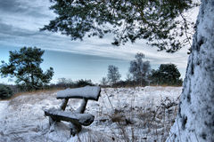 Snowy bench under the tree. In the early morning in december with a blue sky and trees covered with snow countyside in the neterlands Stock Images