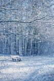 Snowy bench in the woods. In winter stock photos
