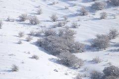 Snowy-Bergabhang im Winter Lizenzfreie Stockfotografie
