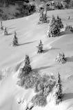 Snowy-Berge mit Bäumen Stockbilder