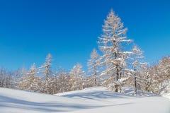 Snowy-Berglandschaft mit Julian Alps Lizenzfreies Stockbild