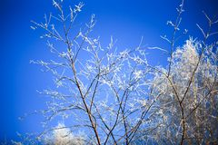 Snowy birch branches in winter sunny day against Stock Images