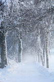Snowy Birch Path II Royalty Free Stock Photo