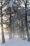 Snowy Birch Path III royalty free stock photos
