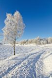 Snowy Birch tree Stock Photos