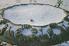 Snowy Birdbath. A light dusting of snow fills a concrete birdbath Royalty Free Stock Images