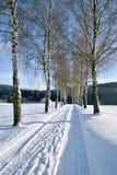 Snowy-Birkengasse Stockfotos