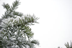 Snowy-Blätter Lizenzfreies Stockfoto