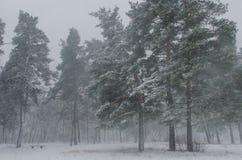 Snowy-Blizzard im Park Stockbild