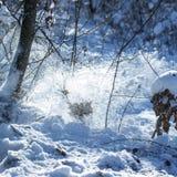 Snowy-Blizzard im Winterwald Stockfotos