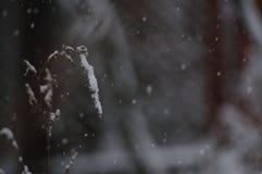 Snowy-Blume im schneebedeckten Sturm lizenzfreie stockbilder