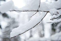 Snowy branch Royalty Free Stock Photos