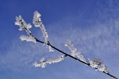 Snowy branch Stock Photos