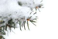 Snowy branch background Royalty Free Stock Photography