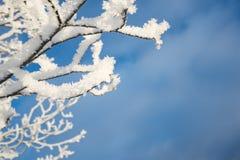 Snowy branch, blue sky background. Snowy tree branch, blue sky background stock photos