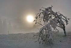 Snowy branch silhouettes of trees with shining sun in fog royalty free stock photo