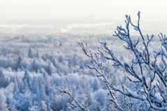 Snowy branch in a winter view Royalty Free Stock Photos