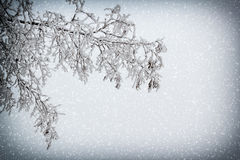 Snowy Branch With Vignette And Snowfall Royalty Free Stock Image