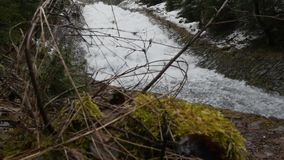 Snowy branch of young Christmas tree sway from the wind on the background of fast moving waterfall creating huge foam on. River. Panoramic shooting and ambient stock footage