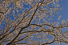 Snowy branches. Winter architekture on a sky Royalty Free Stock Photos