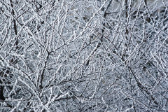 Snowy branches. Winter background with snowy branches Stock Photos