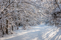 Snowy branches above a forest trail Stock Photo