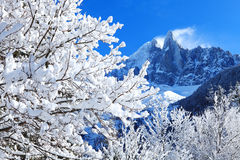 Snowy branches on the background of the Alps Stock Image