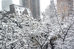 Snowy Branches in the City Royalty Free Stock Image