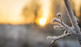 Snowy branches on winter Stock Photography