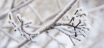 Snowy branches on winter. In Finland Stock Images