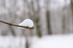 Snowy Branches in winter. nature in winter. Snow Stock Images