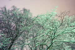 Snowy branches. Winter night background snowy branches Royalty Free Stock Photo