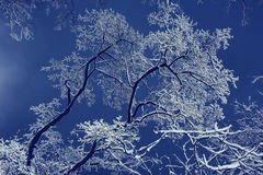 Snowy branches. Winter night background snowy branches Stock Photos