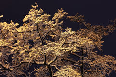 Snowy branches. Winter night background snowy branches Royalty Free Stock Photography